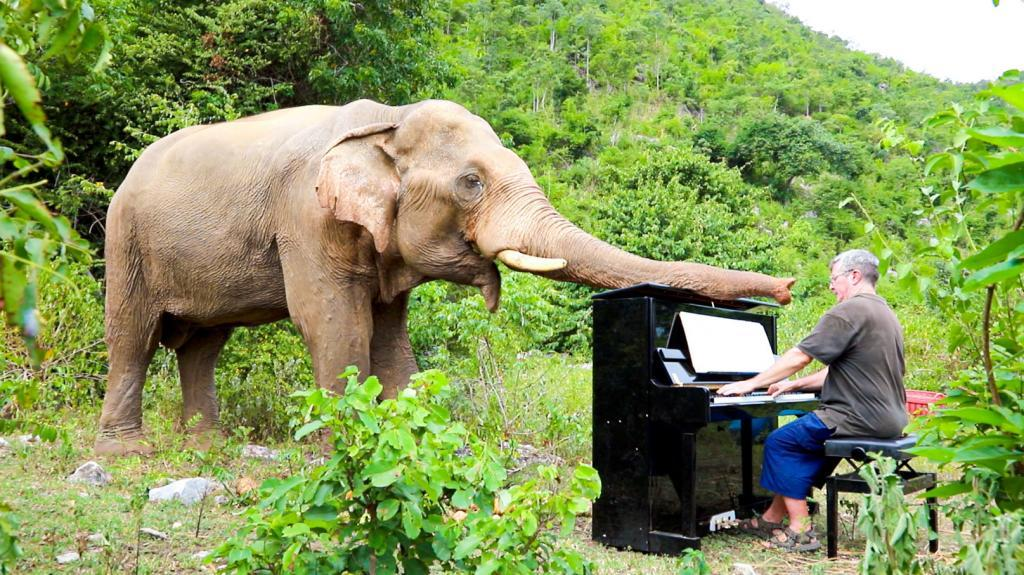 Pianist Paul Barton plays the piano while an elephant touches him with his trunk