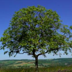 "Profile picture of ""UNTER BÄUMEN – UNDER TREES"" Video experiment on Franz Liszt's Pastoral piano version / Saarbrücken"